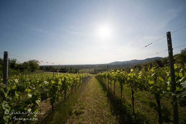 Area sosta camper azienda agricola oinoe la citt del vino traversetolo emilia romagna italia - Sosta camper bagno di romagna ...