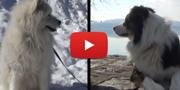 CamperOnBau, tutto ciò che c'è da sapere per viaggiare in camper con il proprio cane